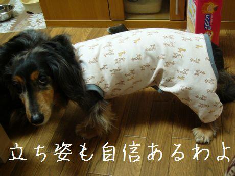 母犬モデル風
