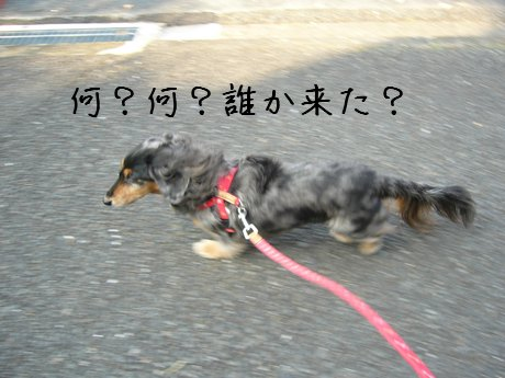 母犬だまされる