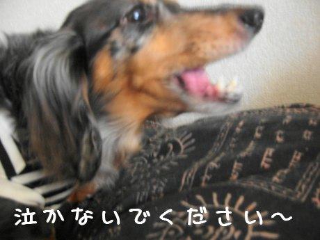 娘犬歌う2