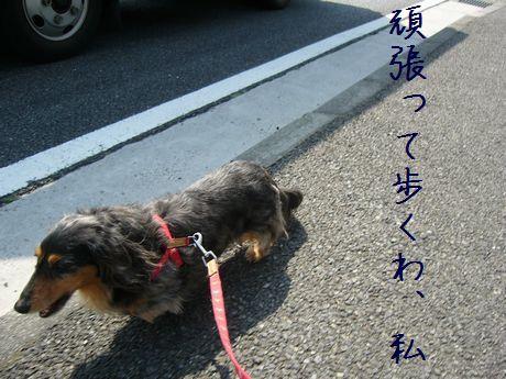 母犬頑張って歩く
