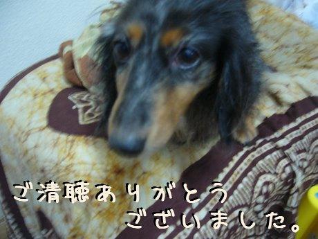 娘犬のお礼