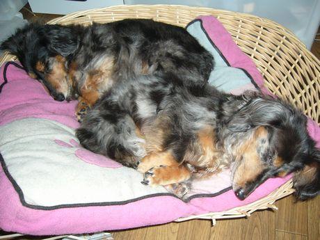おやすみ2匹