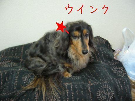 母犬ウインク
