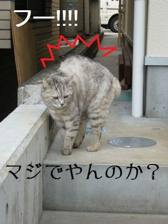 猫ちゃん怒る