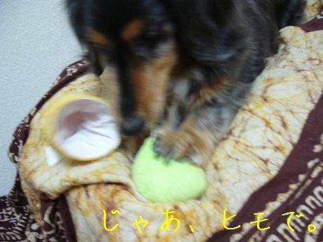 母犬とアイス3