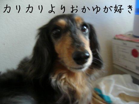 母犬おかゆLOVE