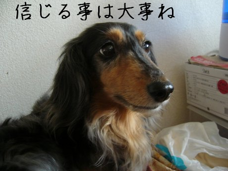 母犬信じる