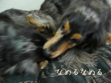母犬舐める