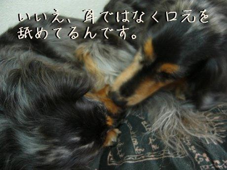 母犬ごまかす
