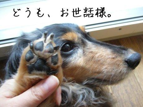 母犬手毛切れた