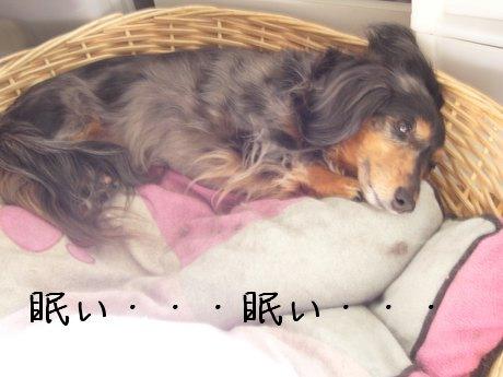 かごで寝る母犬