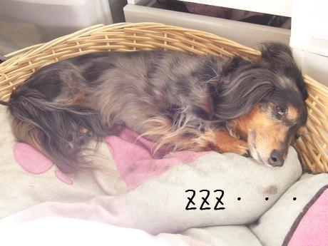 母犬寝てる?起きてる?