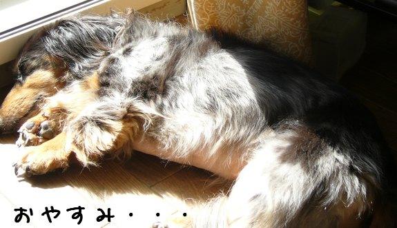娘犬おやすみ