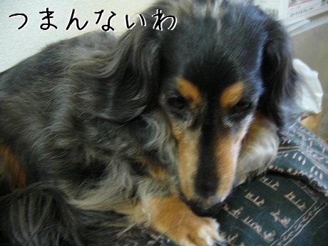 いじける母犬