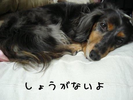 聞き分けのいい娘犬