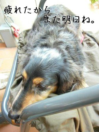 母犬お疲れ