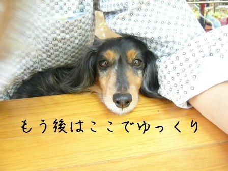 母犬ゆっくり
