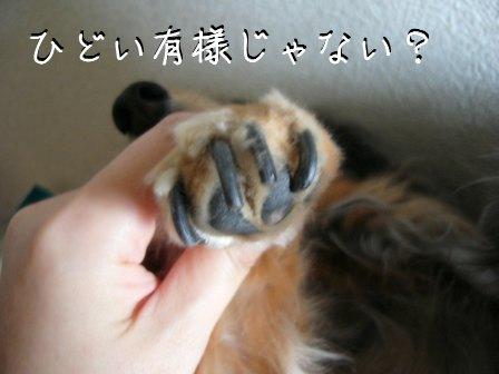 母犬の爪2