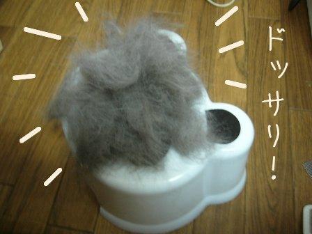 母犬の毛がどっさり