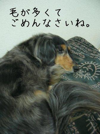 毛の多い母犬