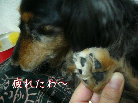 母犬の切った爪