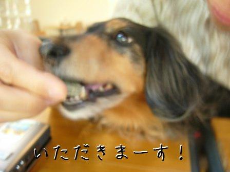 やっと食べれた母犬