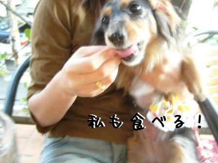 娘犬も食べる
