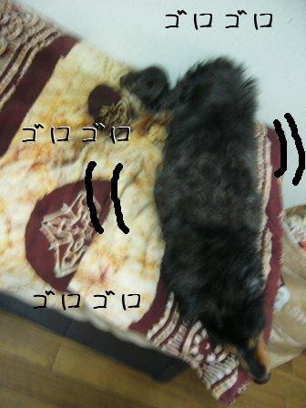 母犬カーニバル
