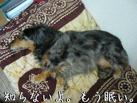 ワガママ母犬
