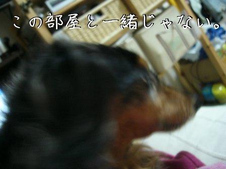 母犬のつっこみ2