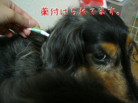 母犬薬付けられる