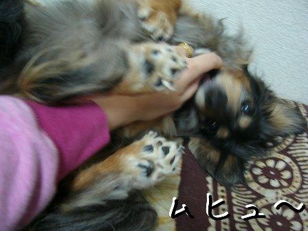 母犬ムヒュー