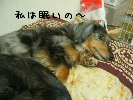 ムスメイヌは寝てる