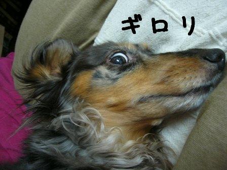 娘犬ギロリ