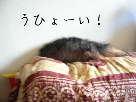 母犬ハッスル