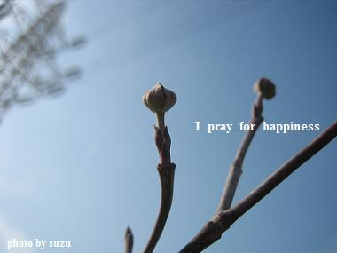 春が来ますように・・・・・