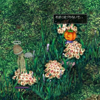 くぼちゃ強し!