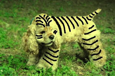 タイガーマハロ