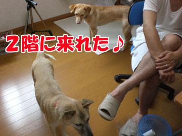 20080827-01.jpg
