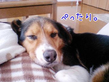 20090306-01.jpg