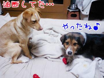 20090312-04.jpg