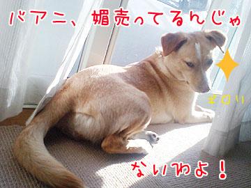 20090413-05.jpg