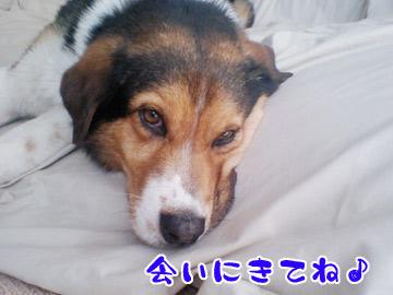 20090418-01.jpg