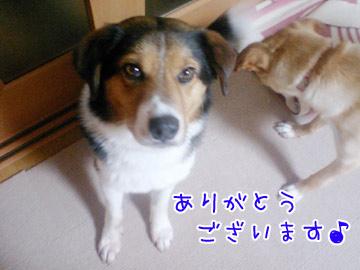 20090515-05.jpg
