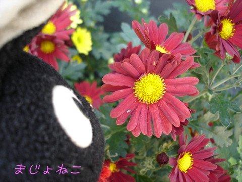 8DSC01184s.jpg