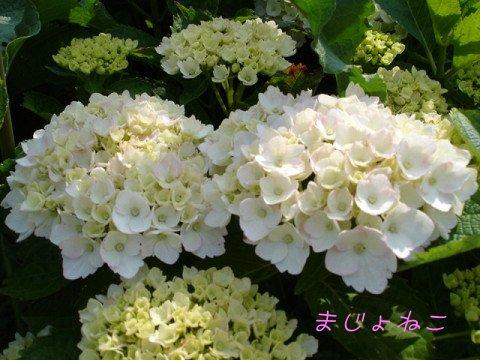8DSC01201s.jpg