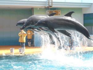 イルカのジャンプにゃん☆.:゚☆.:゚☆.:゚