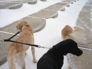 雪景色の散歩ワン
