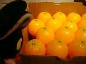 オレンジにゃん☆えへっ☆つくりものにゃんけどにゃん☆ぶみゃ~☆