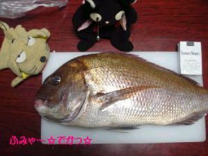 ふみゃ~鯛にゃん☆